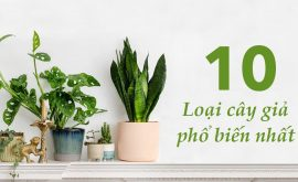 10 loại cây giả phổ biến nhất